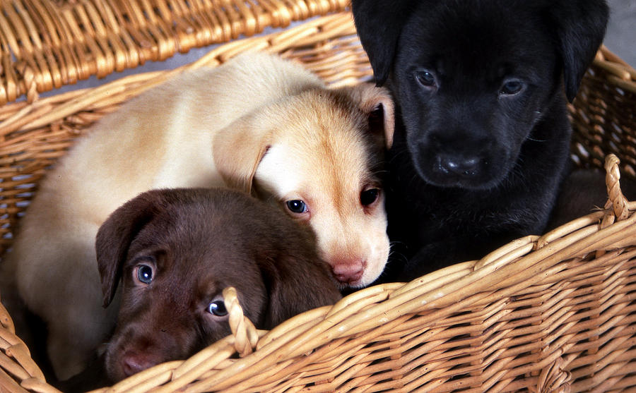 Puppies Photograph - Its A Picnic by Skip Willits