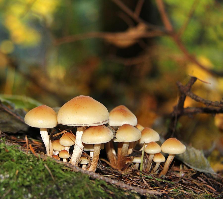 Mushroom Photograph - Its A Small World Mushrooms by Jennie Marie Schell