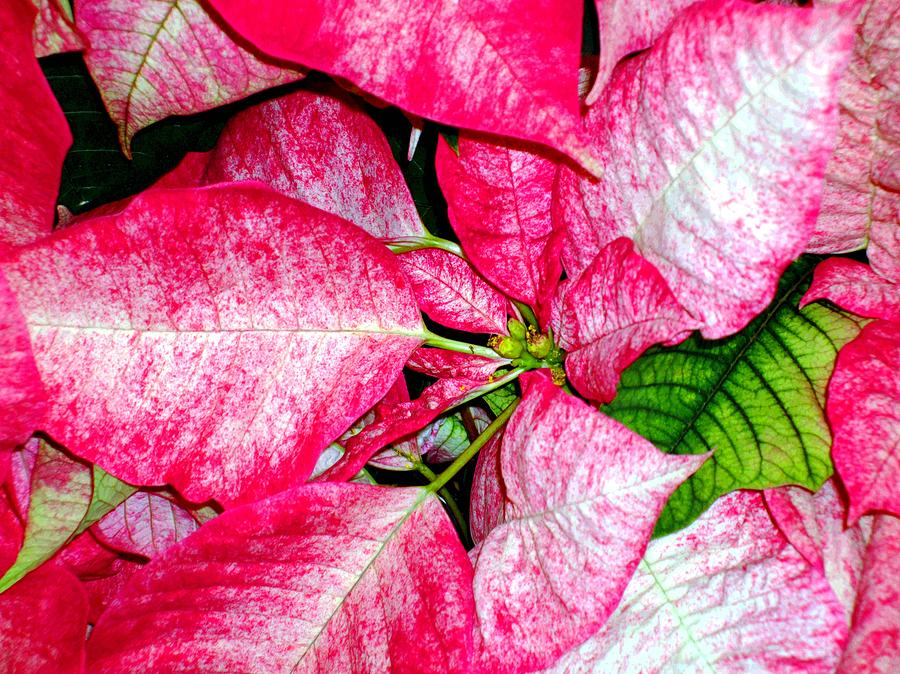 Christmas Photograph - Its Christmas by Mindy Newman