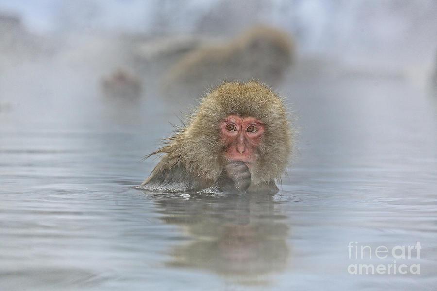 Snow Monkeys Photograph - Its Mine by Leigh Lofgren