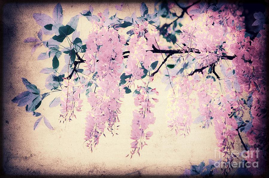 Laburnum Photograph - Its Springtime by Angela Doelling AD DESIGN Photo and PhotoArt
