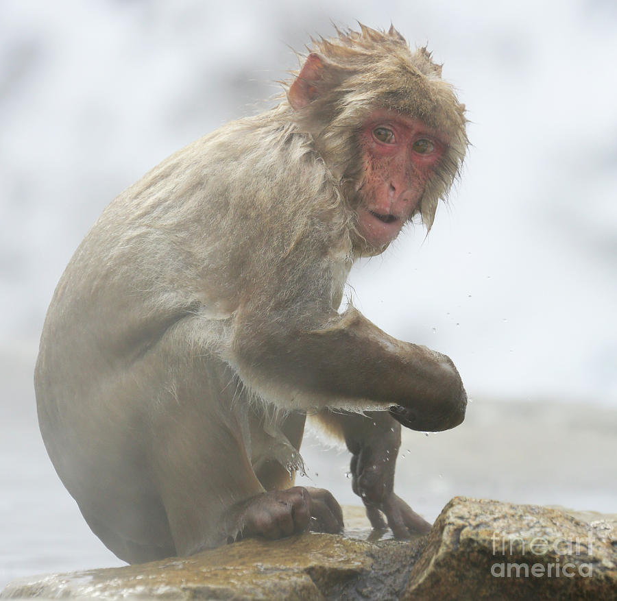 Snow Monkeys Photograph - Its Way Too Cold by Leigh Lofgren