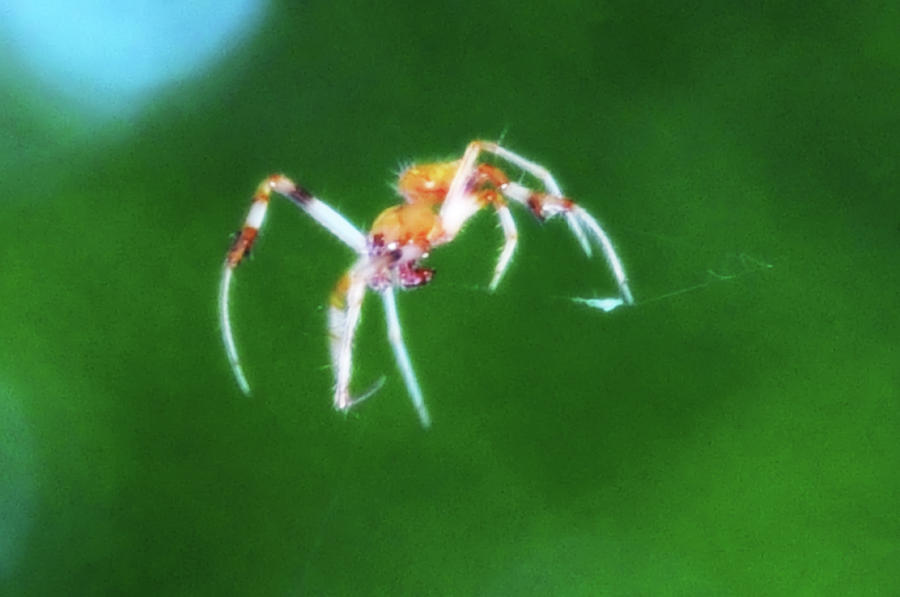 Spider Photograph - Itsy Bitsy Spider by Bill Cannon