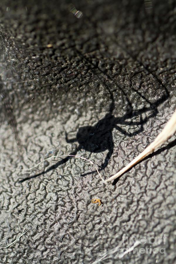 Itsy Bitsy Spider by Douglas Kikendall