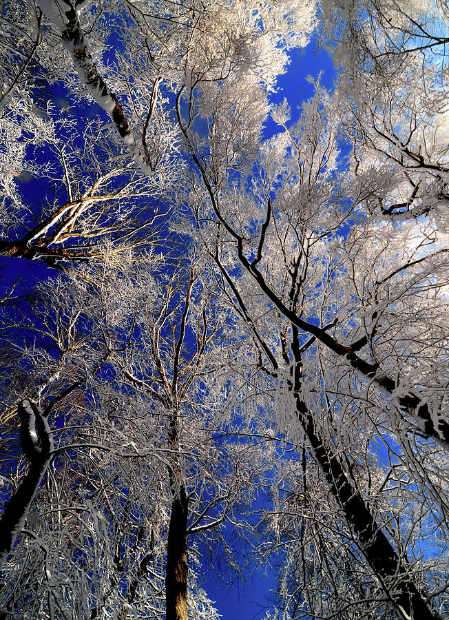 Blue Sky Photograph - Ive Heard Thee by JCYoung MacroXscape