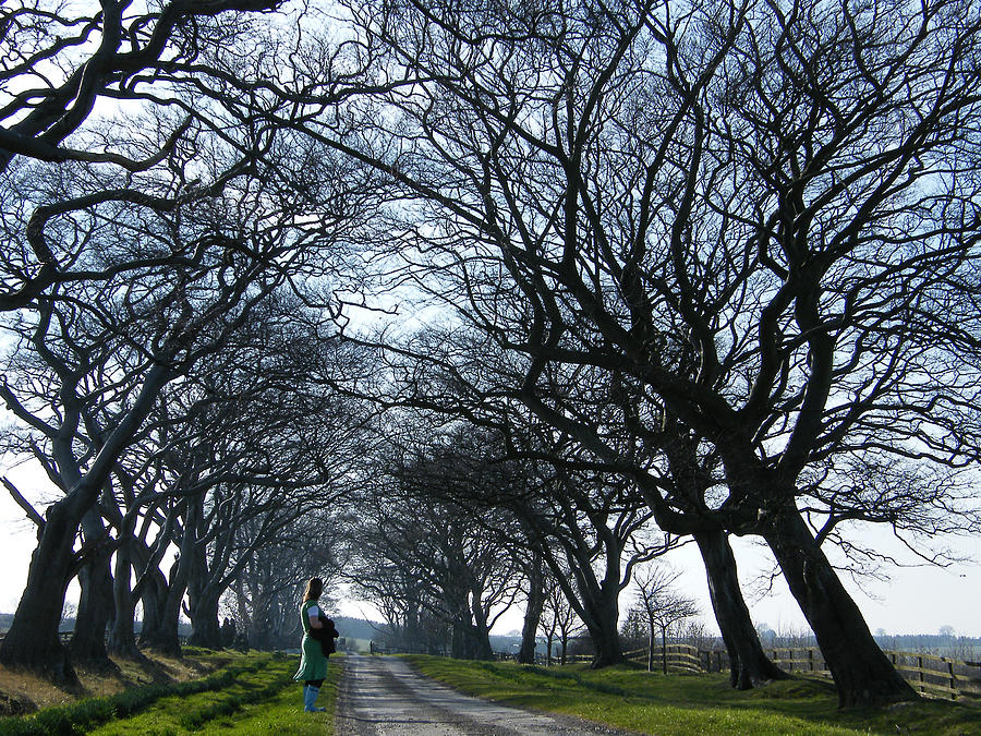 Trees Photograph - Ivesley Avenue by John Young