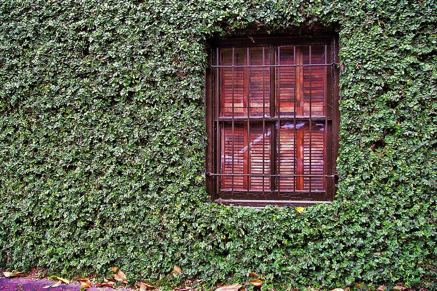 Savannah Photograph - Ivy House by JAMART Photography