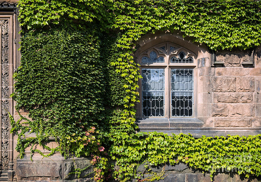 Ivy League Photograph - Ivy League by John Greim