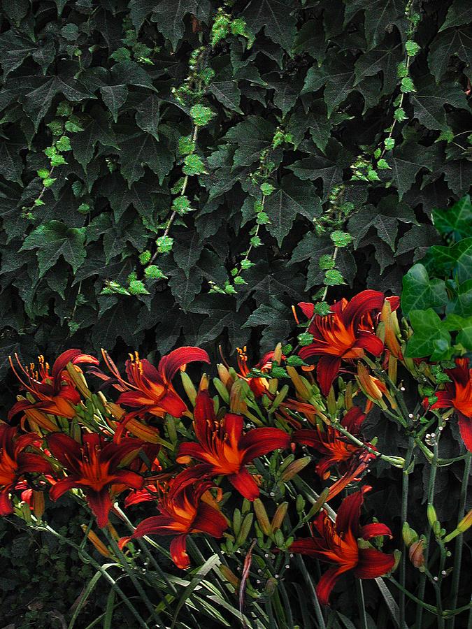 Flower Landscape Photograph - Ivy Over by Richard Gordon