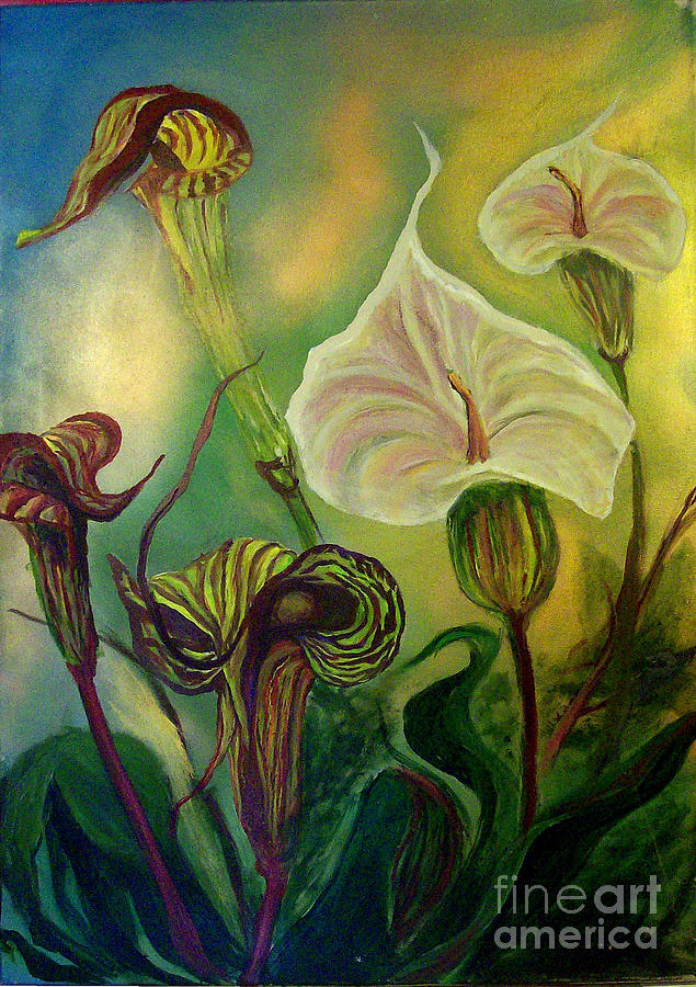 Flower Painting - Jack In The Pulpit  by Jace Miley