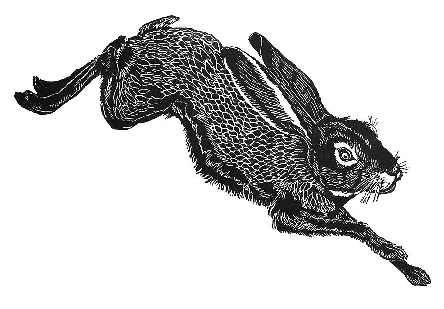 Wildlife Print - Jack Rabbit by Harriet Greene