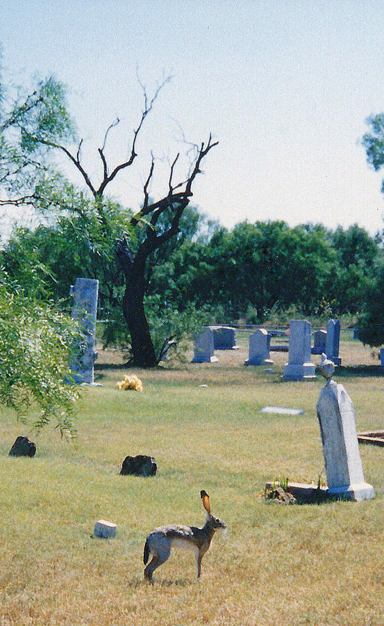 Jack Rabbit In Cementery Photograph by Cindy New