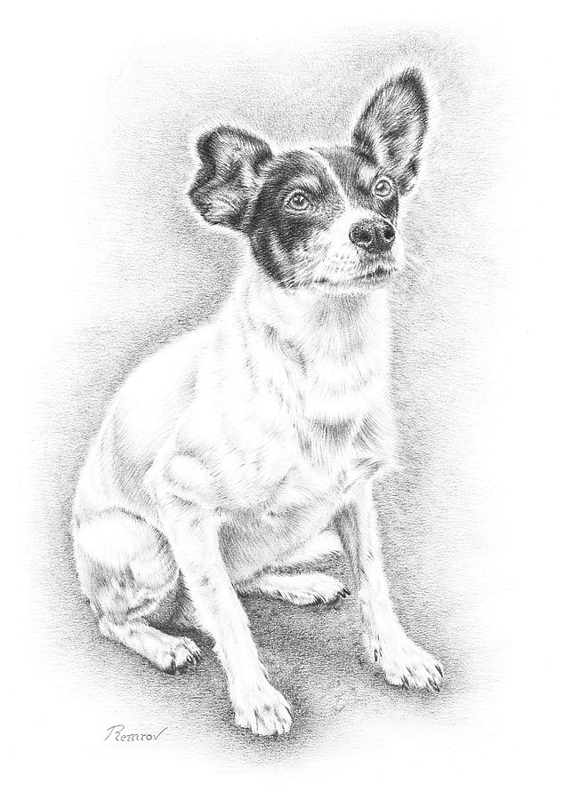 Jack Russell by Remrov