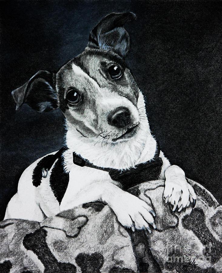Jack Russell Terrier by Terri Mills