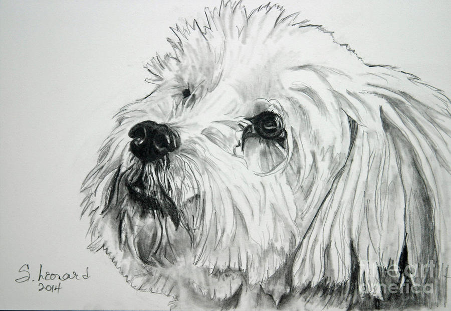 Dog Drawing - Jack by Suzanne Leonard