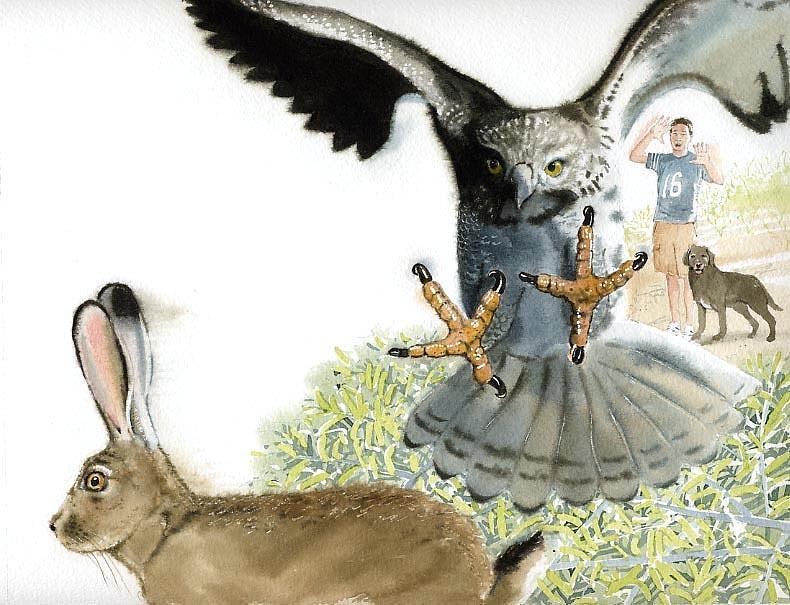 Hawk Painting - Jackrabbit by Denny Bond