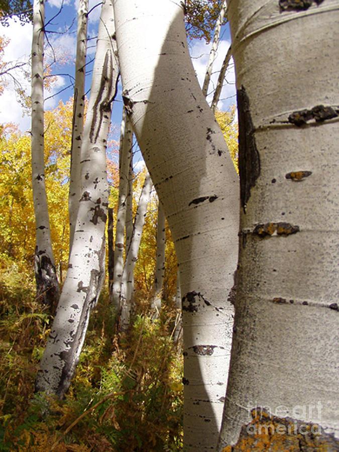 Trees Photograph - Jackson Hole Wyoming by Amanda Barcon