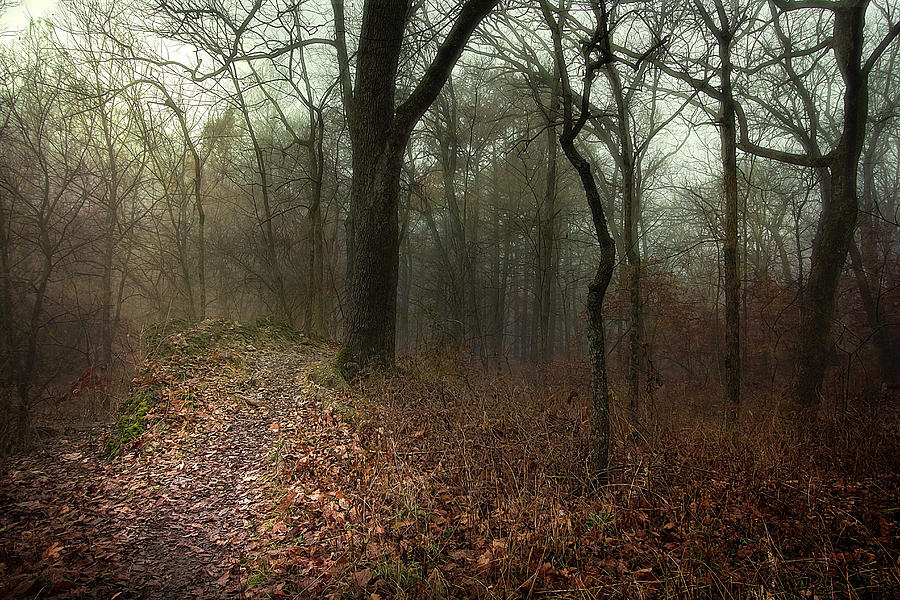 Woods Photograph - Jacomo Trail by Michael Rosell