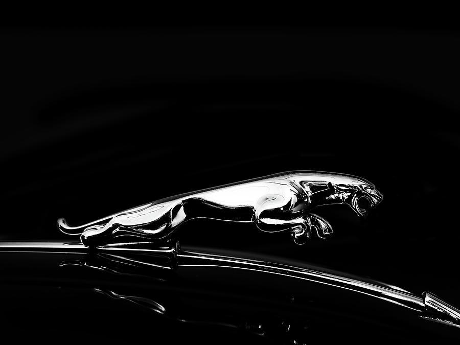 Jaguar Xk120 Photograph - Jaguar by Mark Rogan