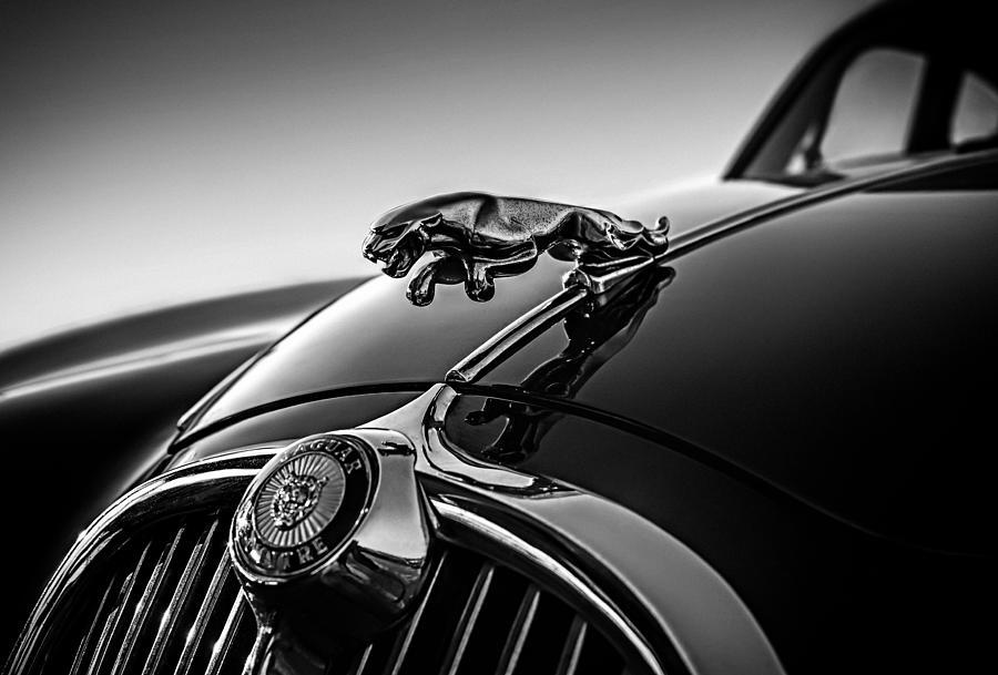 Hood Ornament Digital Art - Jaguar Mascot by Douglas Pittman