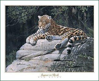 Jaguar Print - Jaguar On Rock by Don Balke