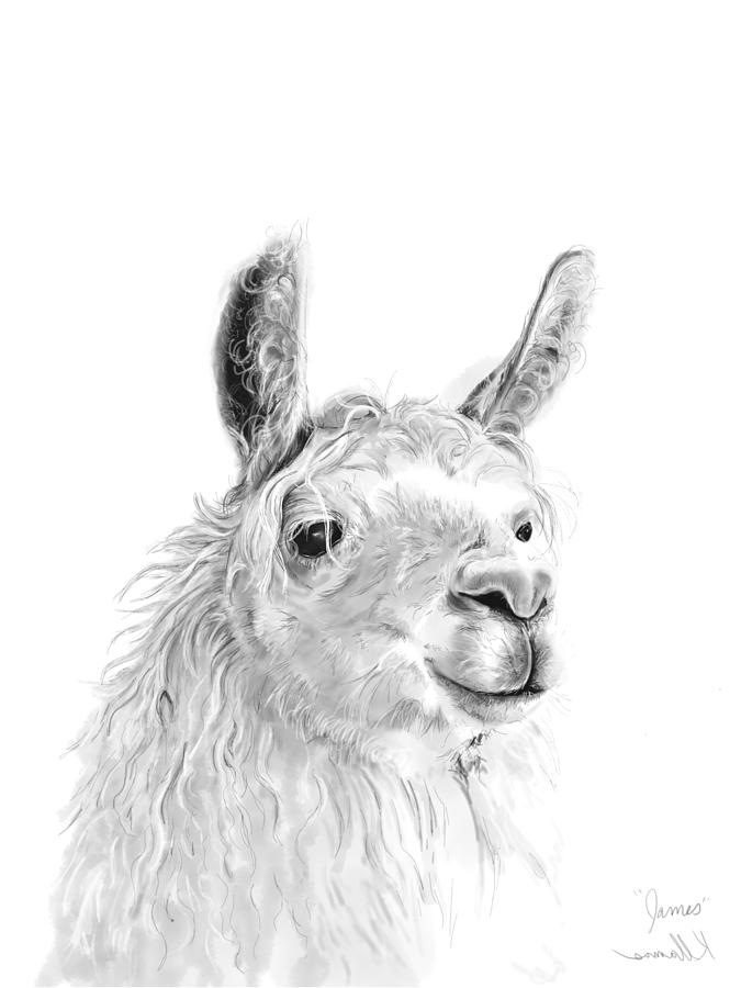 Llamas Drawing - James by K Llamas