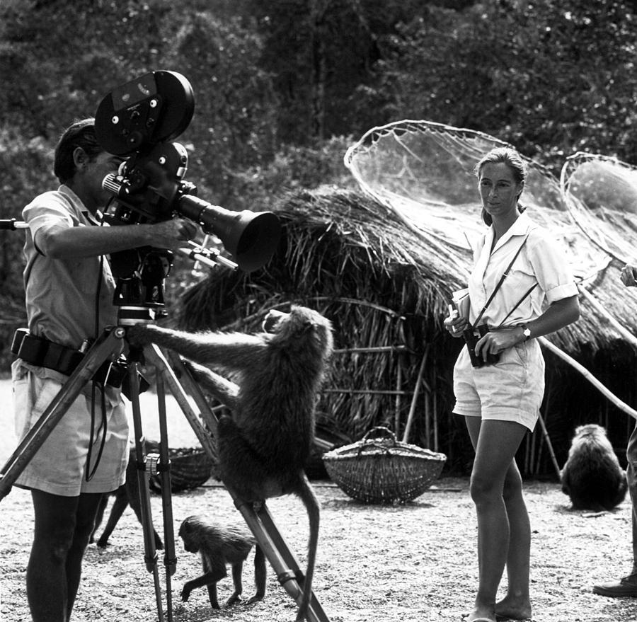 Animal Behaviorist Photograph - Jane Goodall, Animal Behaviorist, Looks by Everett