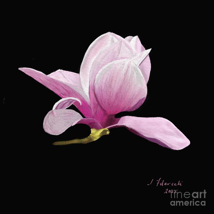 Japanese Magnolia Painting - Japanese Magnolia Floral by Judy Filarecki