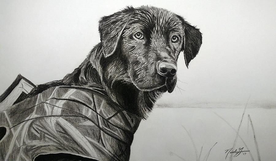 Dogs Drawing - Jango by Nicole Grev
