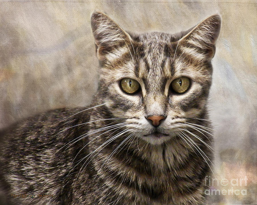 Janie's Kitty by Rhonda Strickland