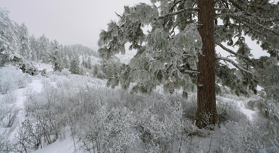 Palouse Photograph - January On Kamiak Butte by Jerry McCollum