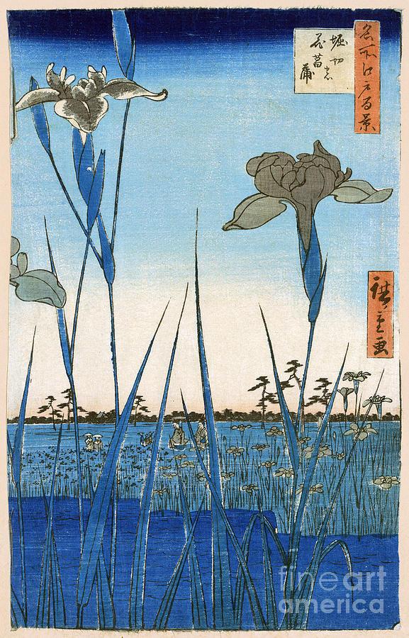1857 Photograph - Japan: Iris Garden, 1857 by Granger