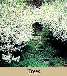 Trees Photograph - Japanese Crabapples by Cella Neapolitan