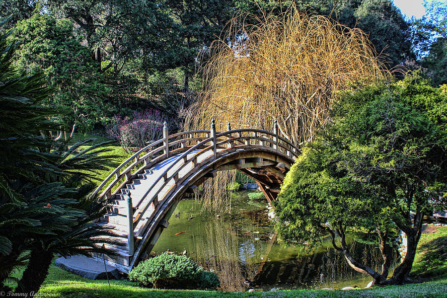 huntington library and gardens photograph japanese garden bridge by tommy anderson