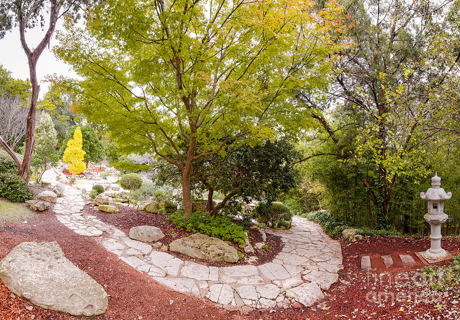 City Photograph   Japanese Garden Serenity At Zilker Botanical Gardens   Austin  Texas Hill Country By