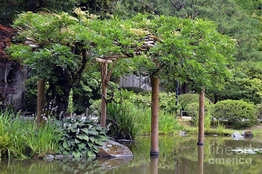 Japanese Gardens 4 by Carol Eliassen