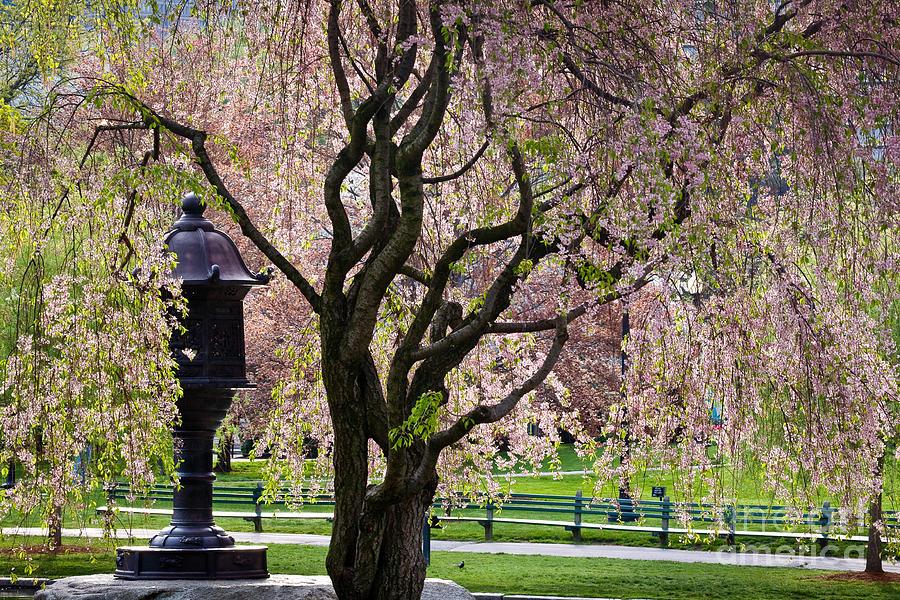 Boston Photograph - Japanese Lantern by Susan Cole Kelly