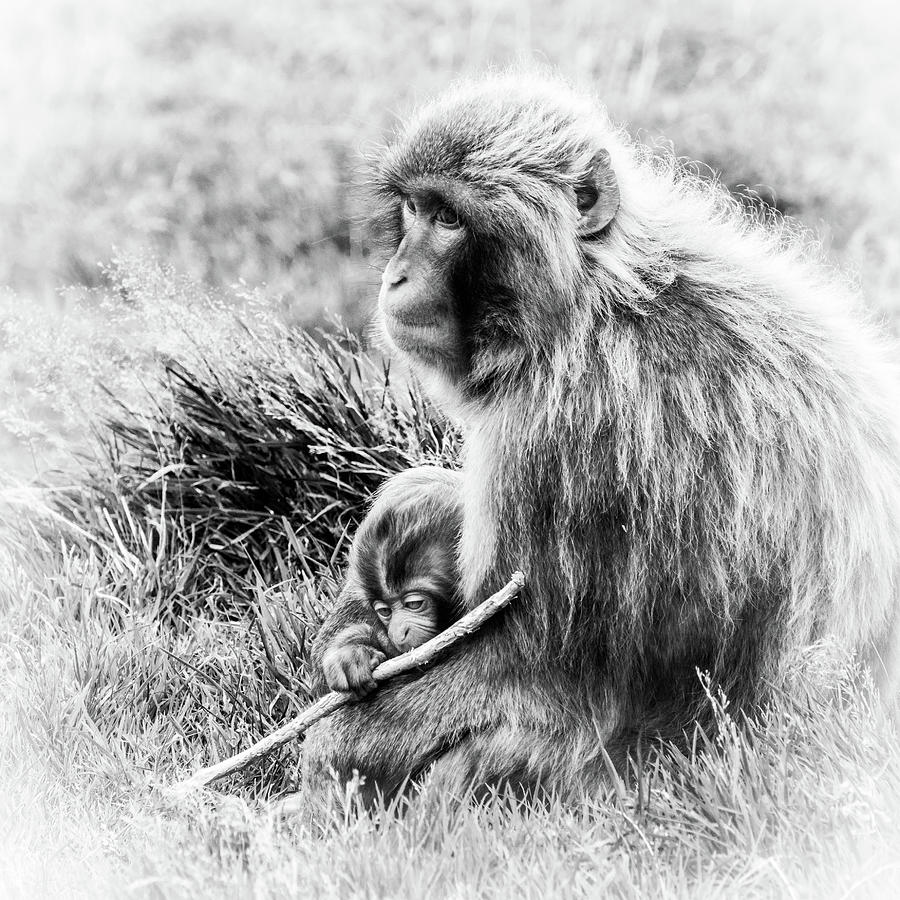 Japanese Photograph - Japanese Macaque Mother and Child by Hakon Soreide