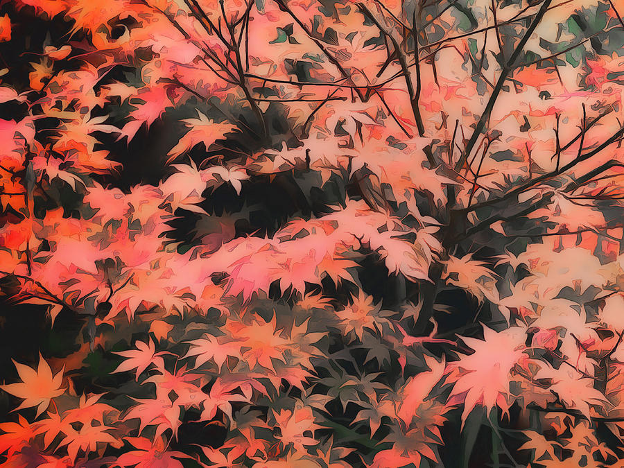 Maple Tree Digital Art - Japanese Maple - Nature Art by Ann Powell
