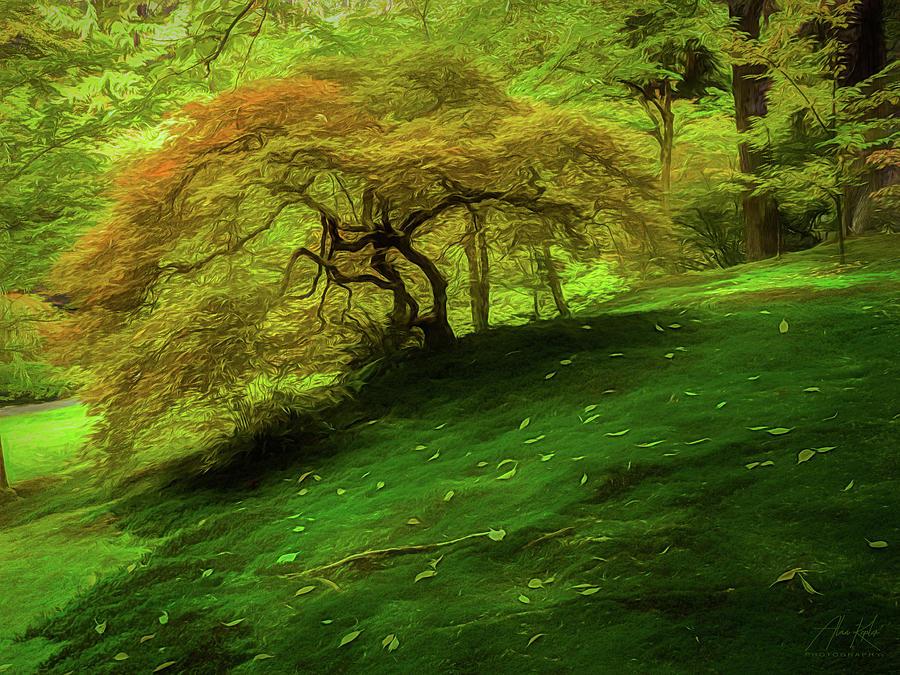 Japanese Maple Turning Photograph