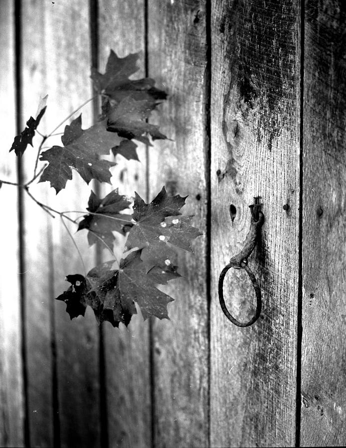 Japton Door Photograph by Curtis J Neeley Jr