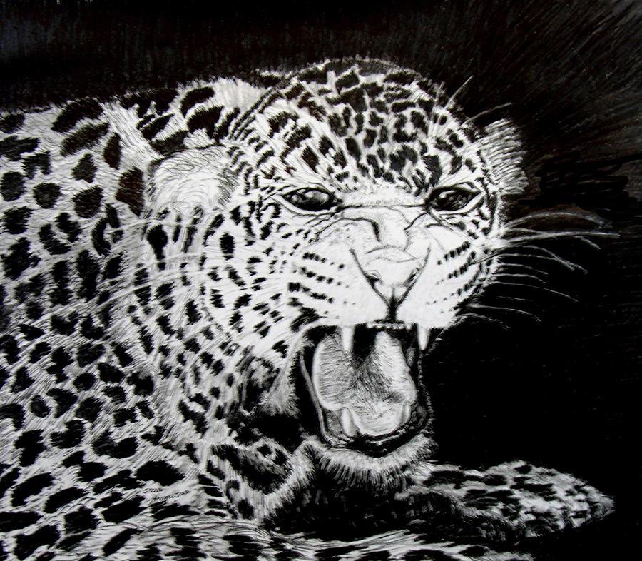 Jaquar Drawing - Jaquar II by Stan Hamilton