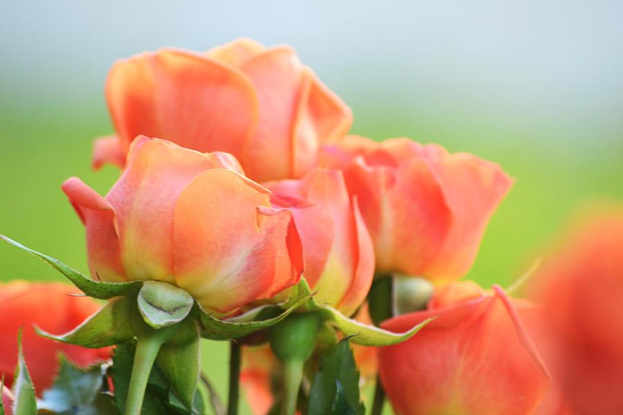Jardin De Rosas by Melanie Moraga