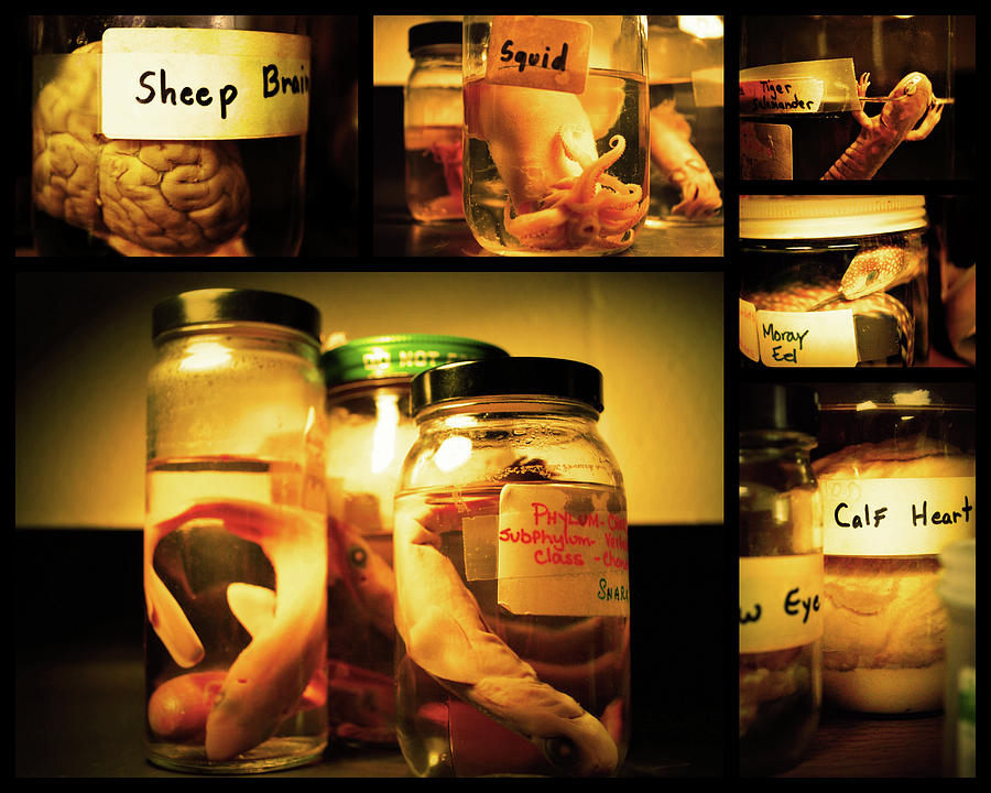 Specimens Photograph - Jarred Collection I by Rheann Earnest