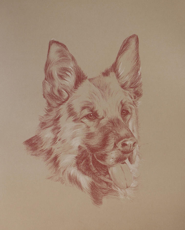 Dog Drawing - Jasmine by Wendy Booth