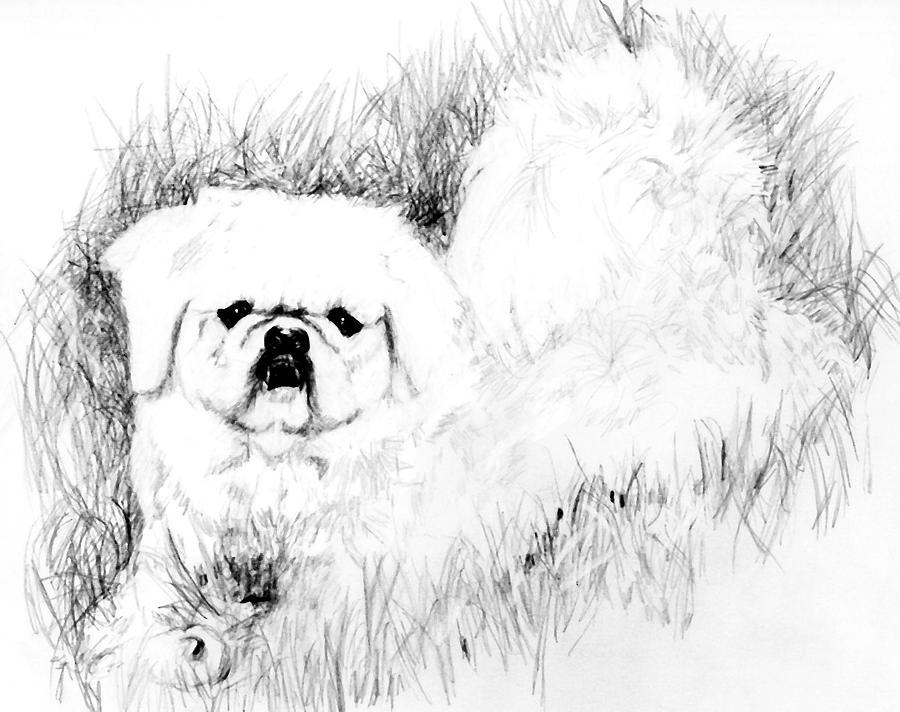 Jasper Drawing by Carliss Mora