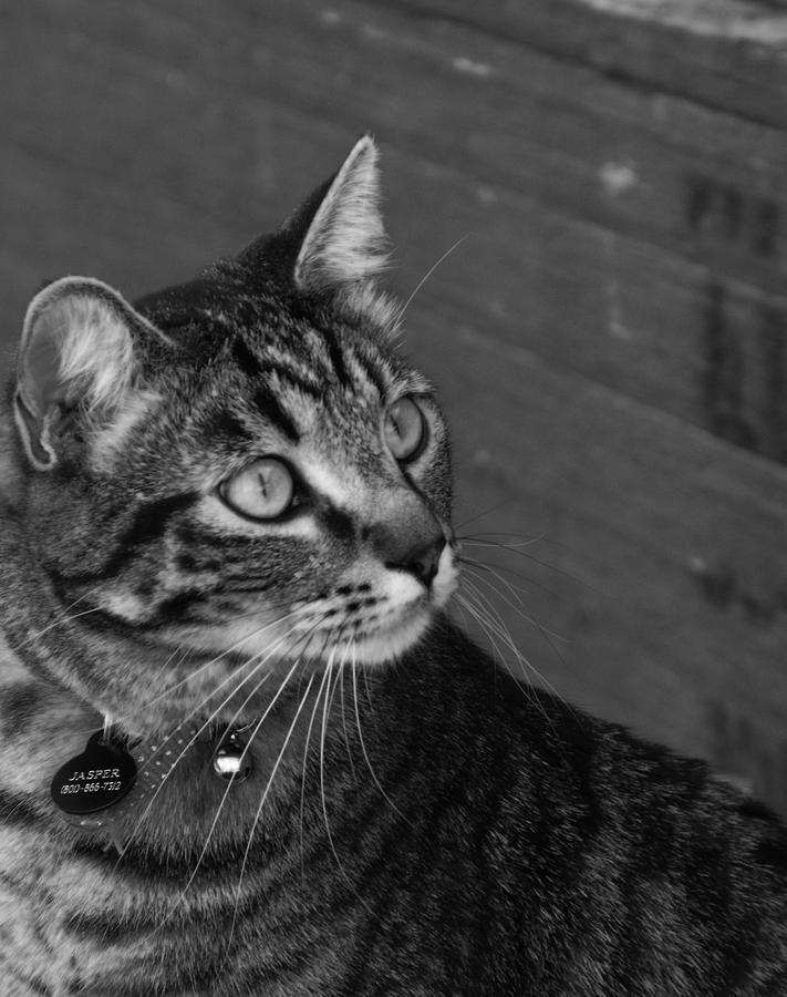 Animal Photograph - Jasper by Jan  Tribe