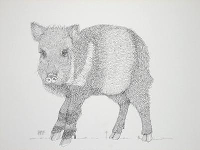 Print Drawing - Javelina by Joanie Arvin