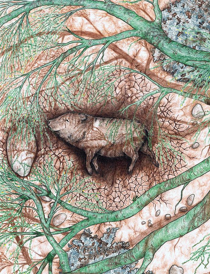 Arizona Drawing - Javelina Shade by Theresa Higby