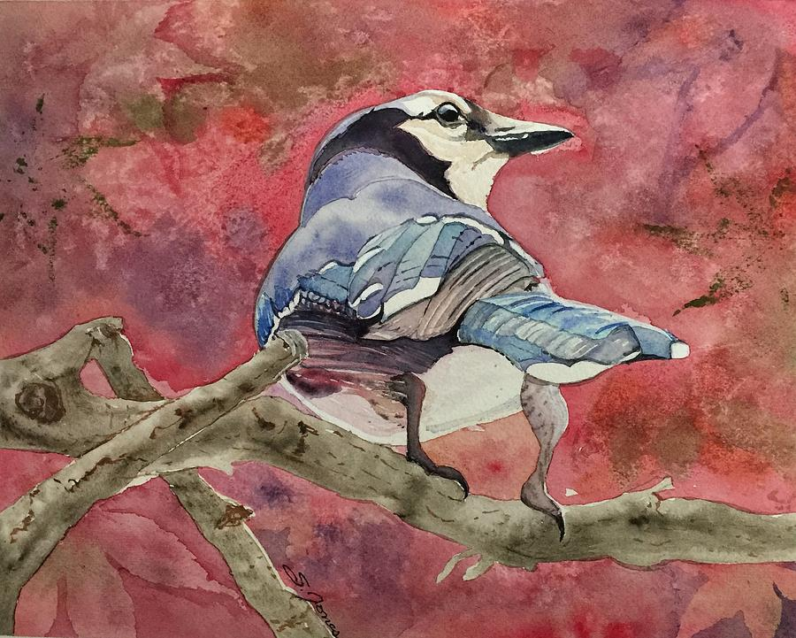 Jay in the Japanese Maple by Sonja Jones